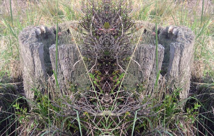 spiegelbild-burg