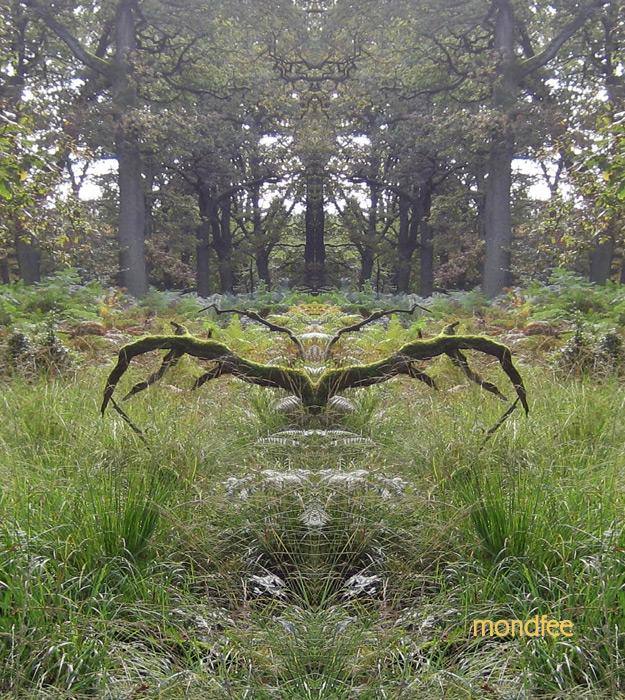 spiegelbild-geweih