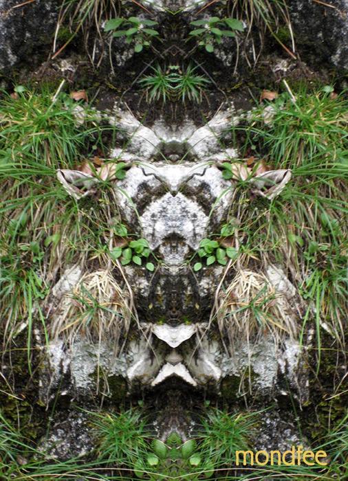 spiegelbild-pan