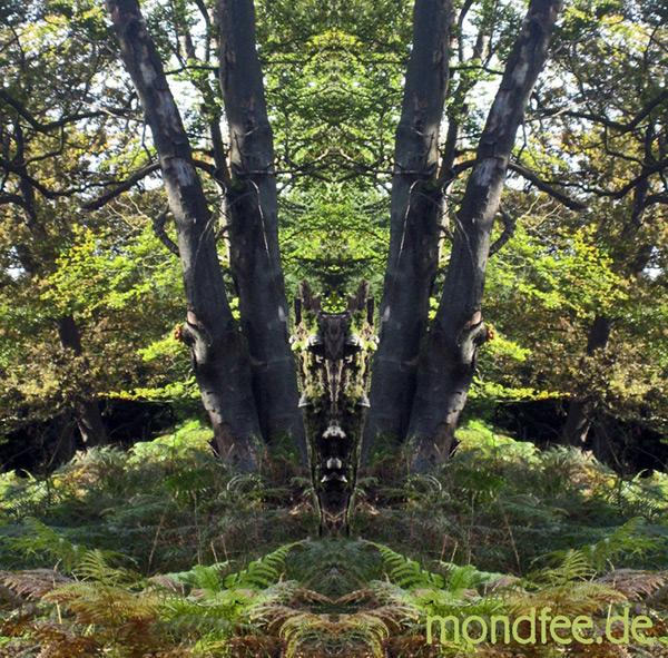 spiegelbild-waldmann1