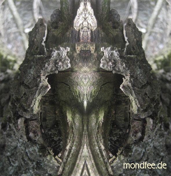spiegelbildholzrinde